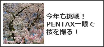PENTAX一眼レフで桜を撮る!